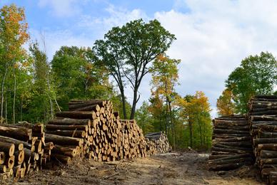 Qui vend du bois de chauffage ?